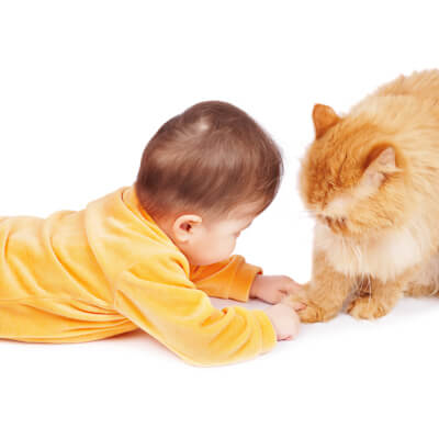 Introducing your new baby to your cat