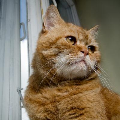 Kidney disease in your cat