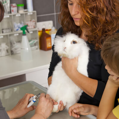 Injecting your cat