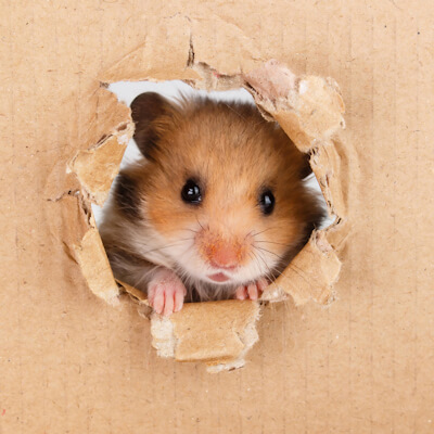 Hamsters: Cancer