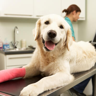 Pet Insurance For Your Dog
