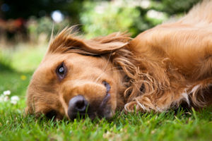 Managing pain in pets
