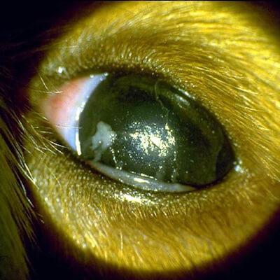 'Dry Eye' (Keratoconjunctivitis Sicca)